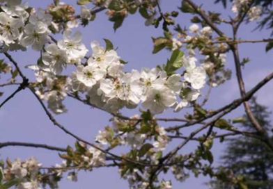 Attività di primavera