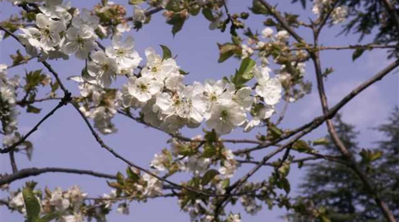 Primavera a Cittiglio (VA)